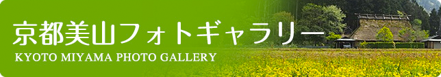 banner_gallery